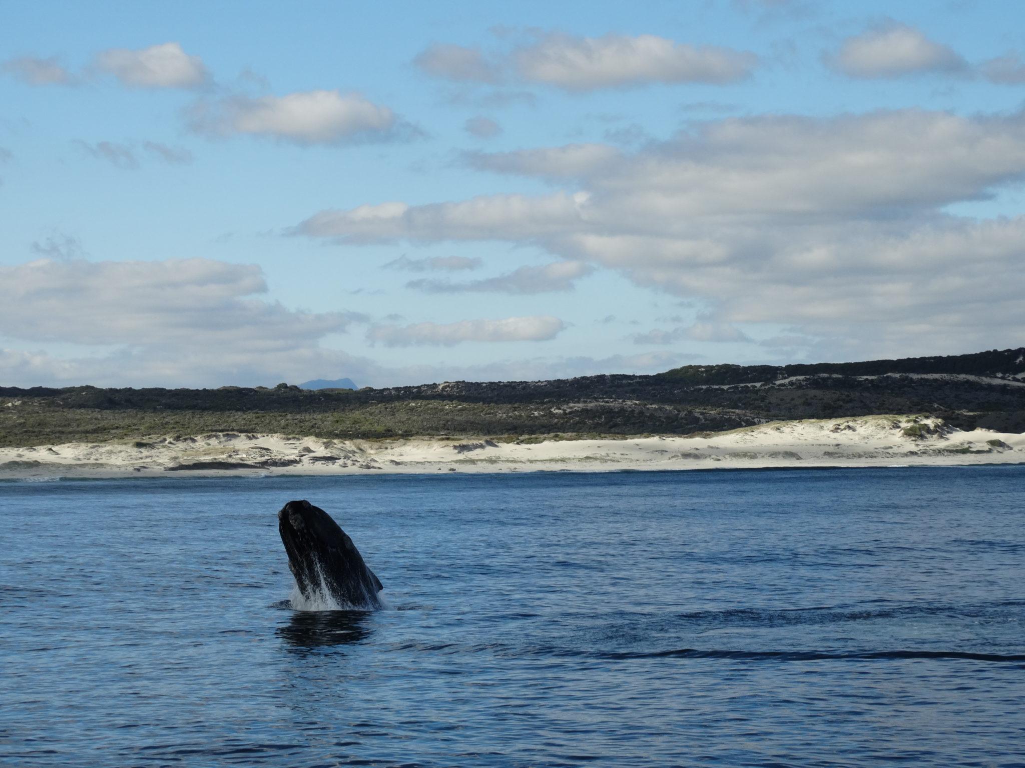 Whale And Cheetah Tour – Cape Town Day Tour