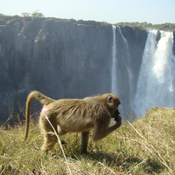 Local resident at Victoria Falls (Copy)
