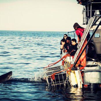 White-Shark-close-encounters