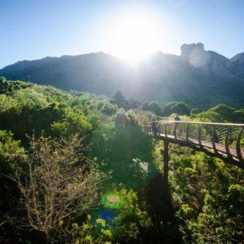 Treetop Canopy Walkway – Kirstenbosch Gardens
