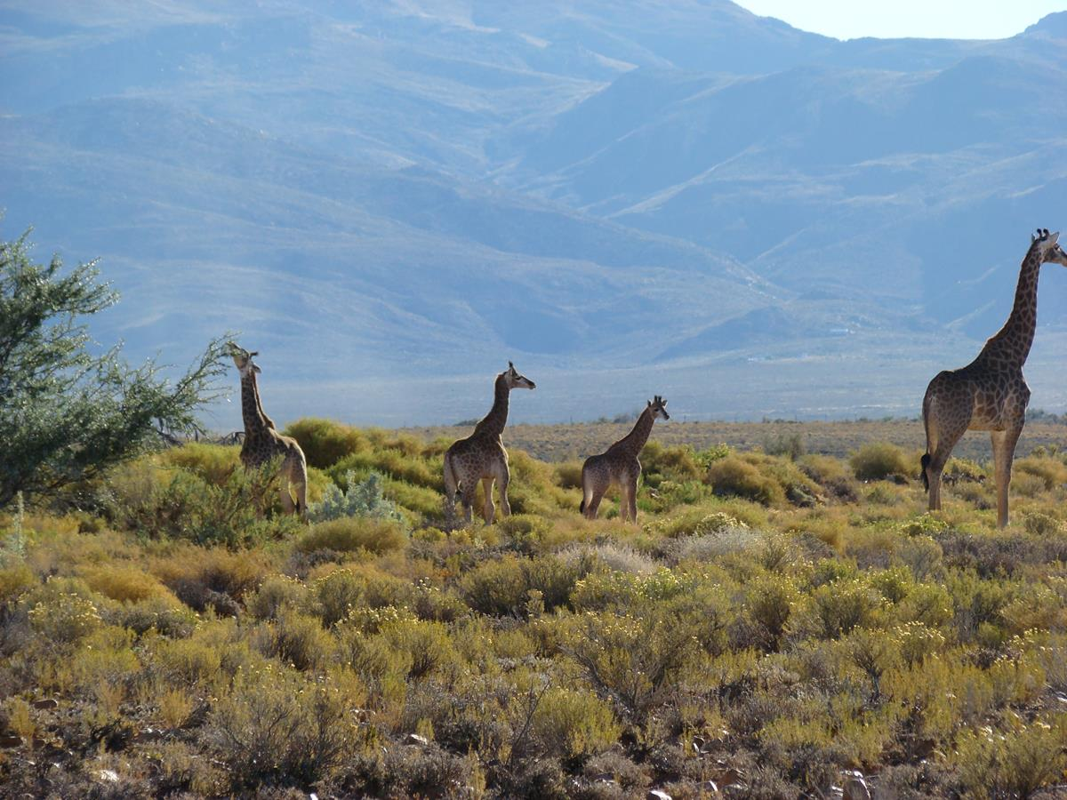 Giraffe Family Spotted During Overnight Luxury Safari At The Game Reserve