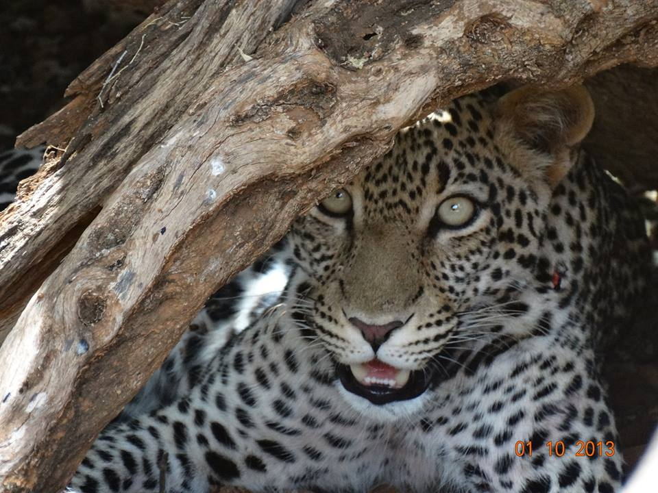 5 Night And 6 Day Cape To Kruger Adventure