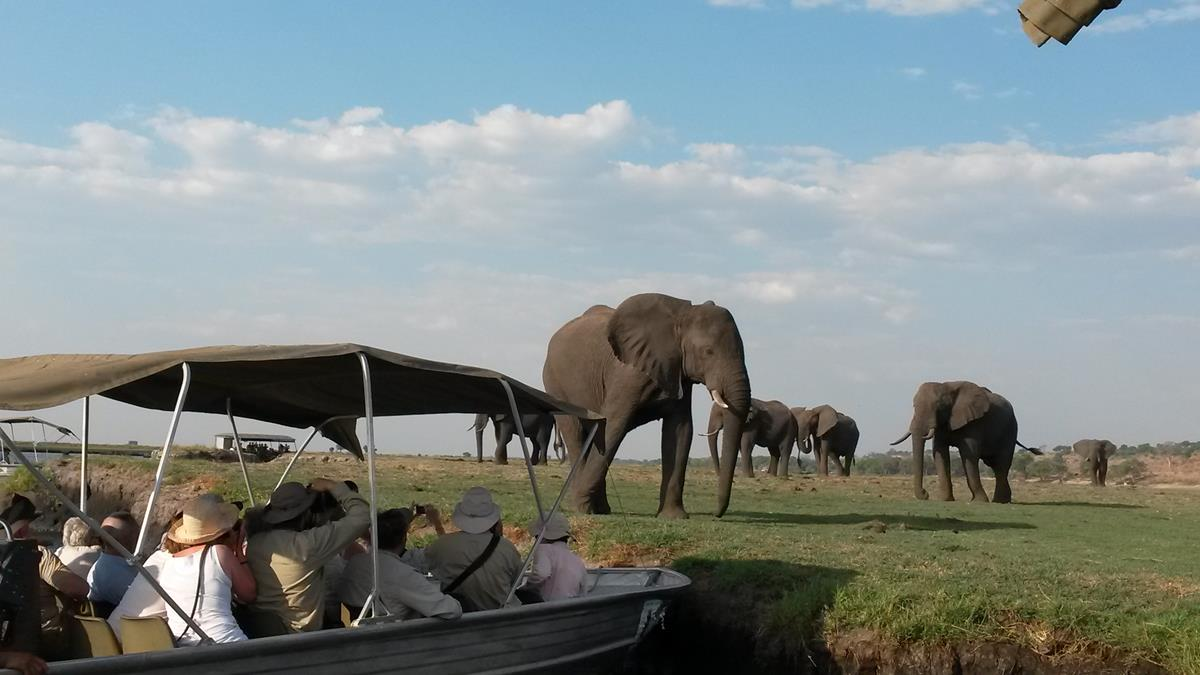 Game viewing on the Chobe River