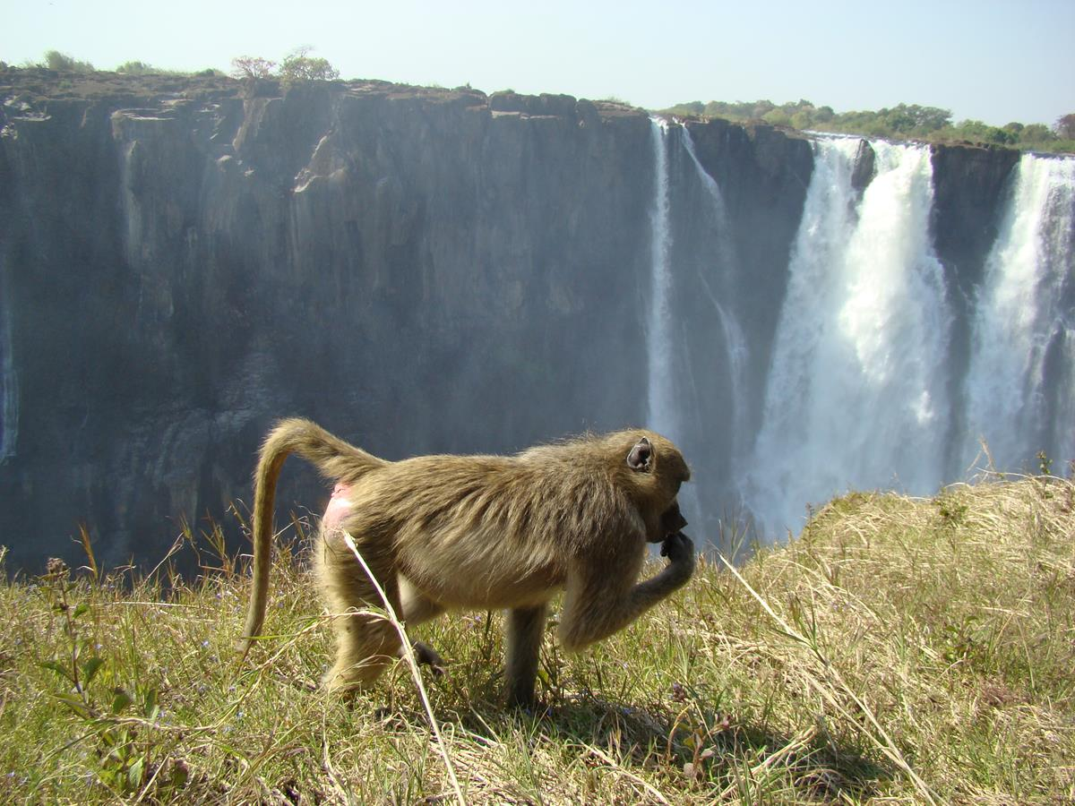 Local resident at Victoria Falls