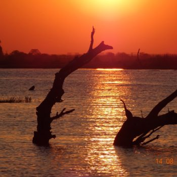 Sunset in the Okavango Delta1
