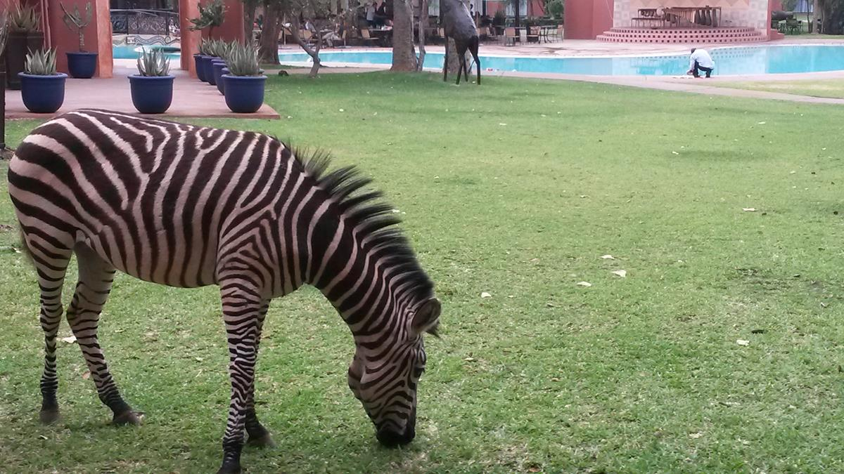 Wildlife on the lawns at the Royal Livingstone (Copy)