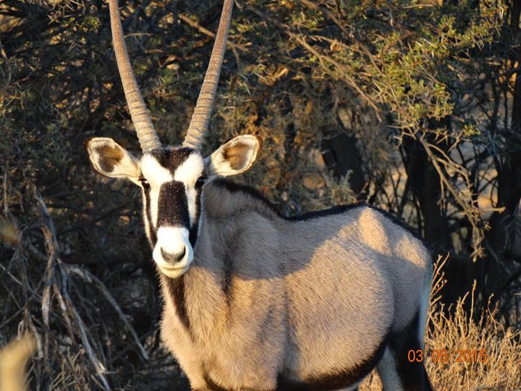 Full Day Wildlife Safari