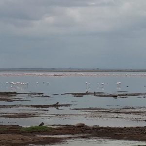 Flooded Wetland Of Amboseli