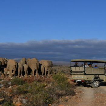 Luxury Safari Sanbona