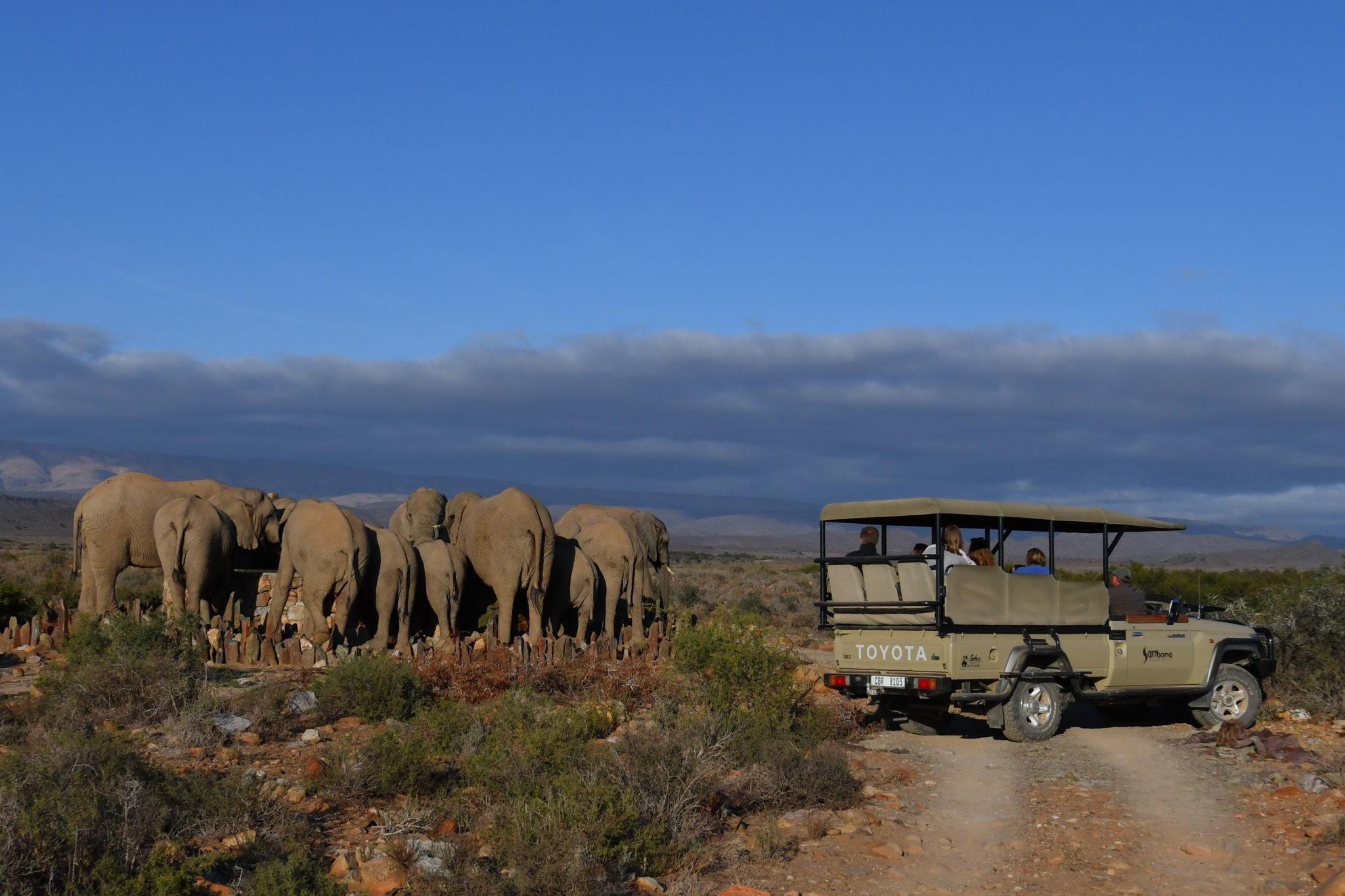 Luxury Safari Sanbona