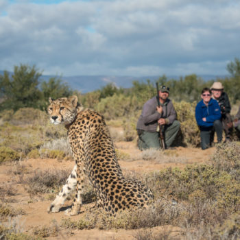Sanbona Walking Safari
