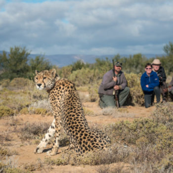 On Walking Safari at Sanbona Wildlife Reserve