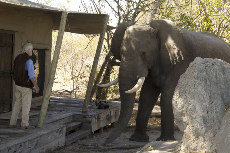 Elephant Visiting The Luxury Tented Lodge At Zarafa Camp